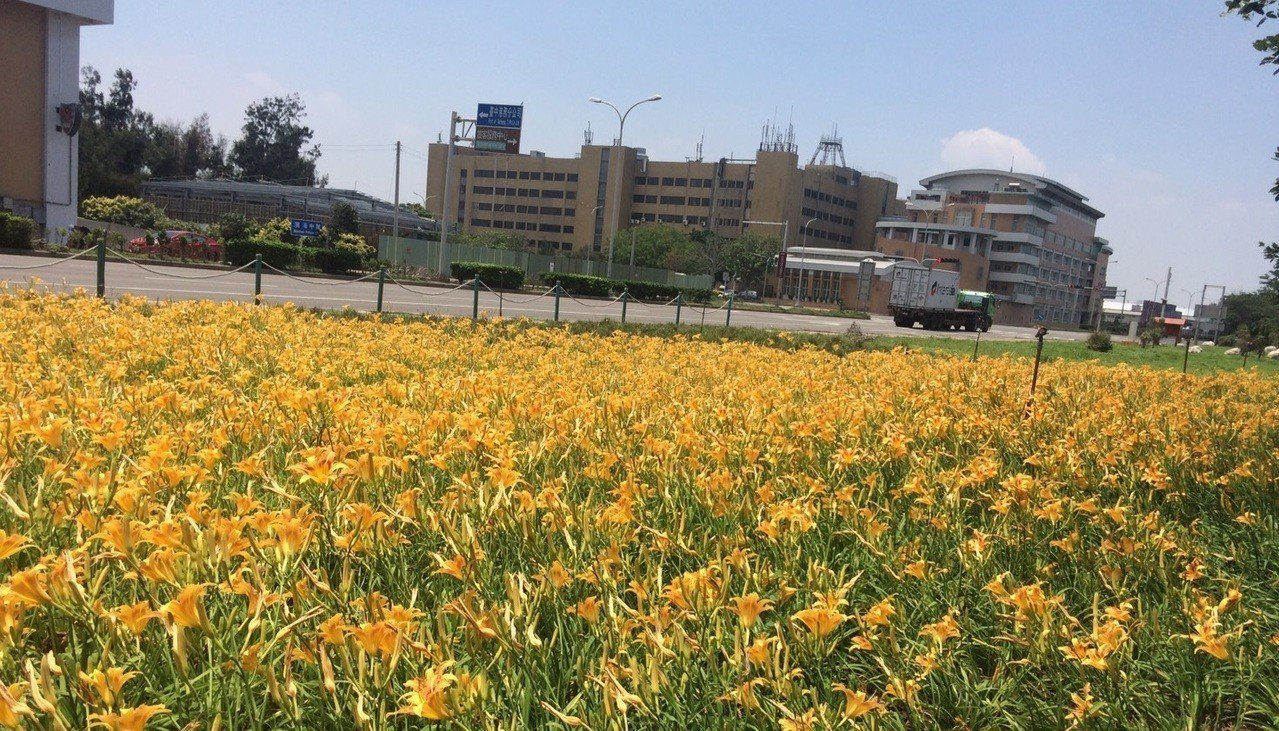 台中港務分公司在台中港旅客服務中心停車場前廣場,種植5萬多株檸檬萱草,十分美麗。...