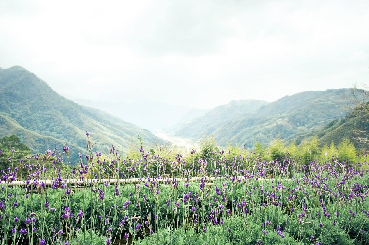 薰衣草森林尖石店今年5月22日原地重新開幕。圖/擷取自薰衣草森林官方臉書