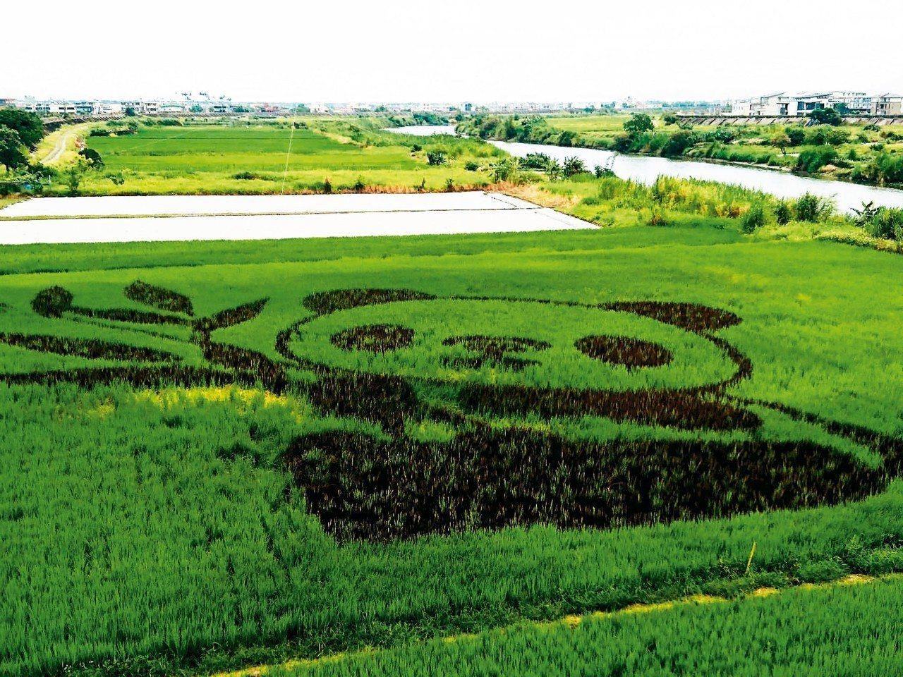 宜蘭縣壯圍鄉公所推出彩繪稻田,稻田裡長出貓熊。 記者羅建旺/攝影