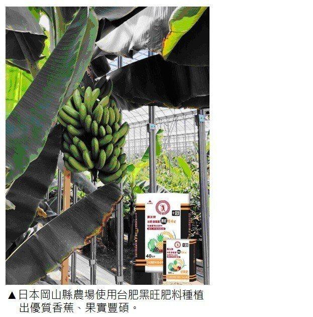 日本岡山縣農場使用台肥黑旺肥料種植出優質香蕉,果實豐碩 台肥公司/提供