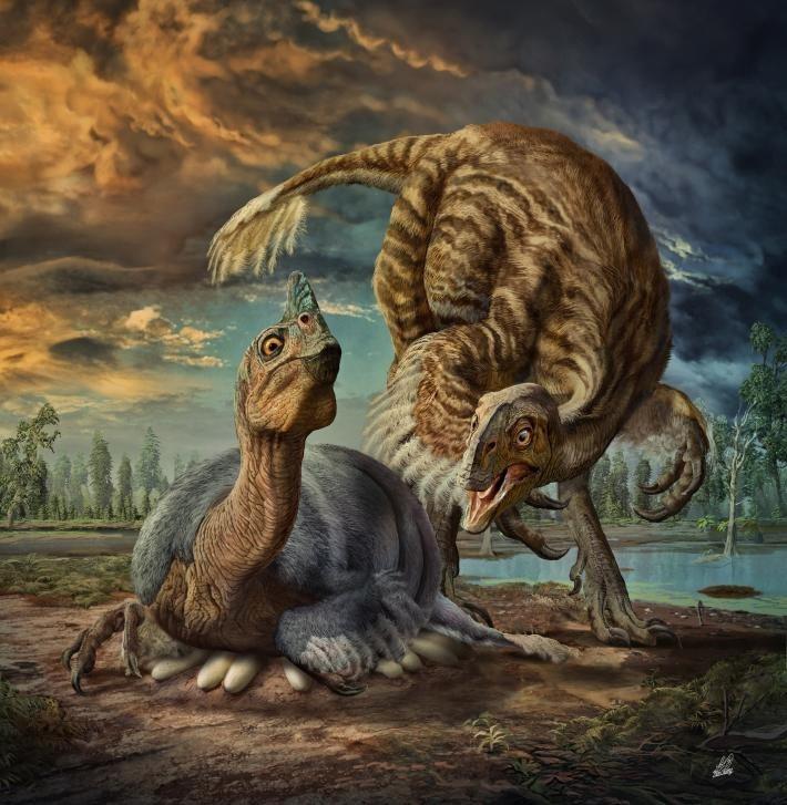 日本學者研究,巨型恐龍如何在不把蛋壓碎的狀況下孵蛋。 圖擷自nationalge...