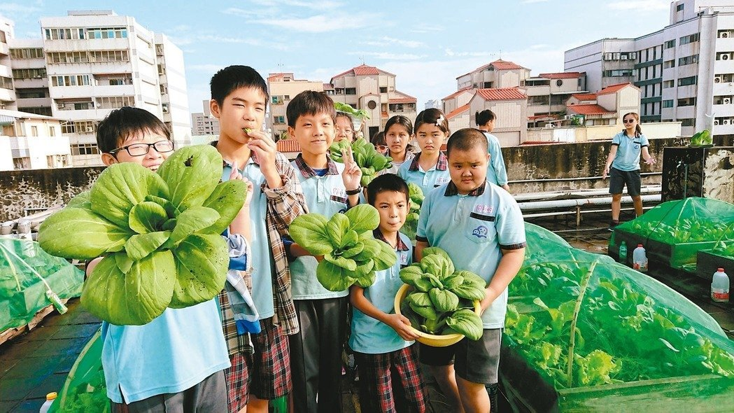 台中市何厝國小位於市區,學校利用頂樓種菜,從幼兒園到小六都參與食農教育,種出來的...