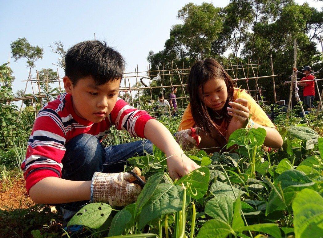 瑞井國小土壤多礫石,風大、水分易流失,栽種初期學生每天都會到農園灌溉。 圖/瑞井...