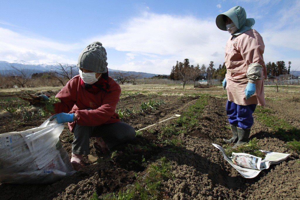 有人說:「日本的農業若是沒有實習生就無法維持,不雇用實習生,全靠自己的力量運作的農家已經成為少數了。」 圖/美聯社