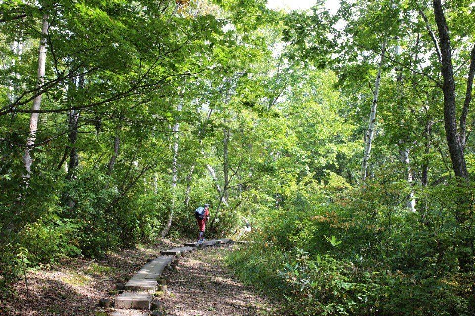 ▲舒適好走的棧道,有一種走在公園裡的錯覺。(Cliff 攝)