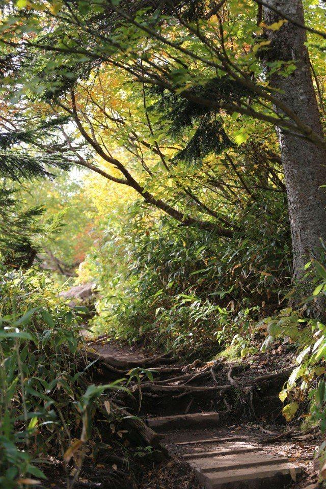 ▲一開始路況良好,坡度也平緩,等到開始上坡了,才有木梯出現。(Cliff 攝)