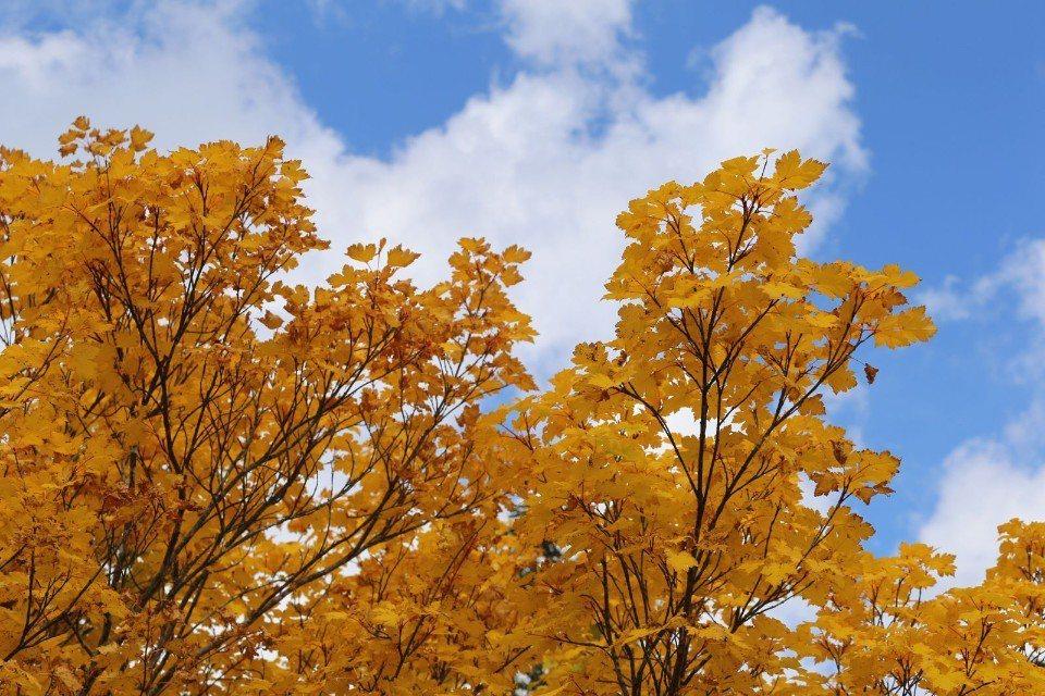 ▲高緯度的地區,紅葉到處都是,不用費心找尋,隨便一拍都是美景。(Cliff 攝)