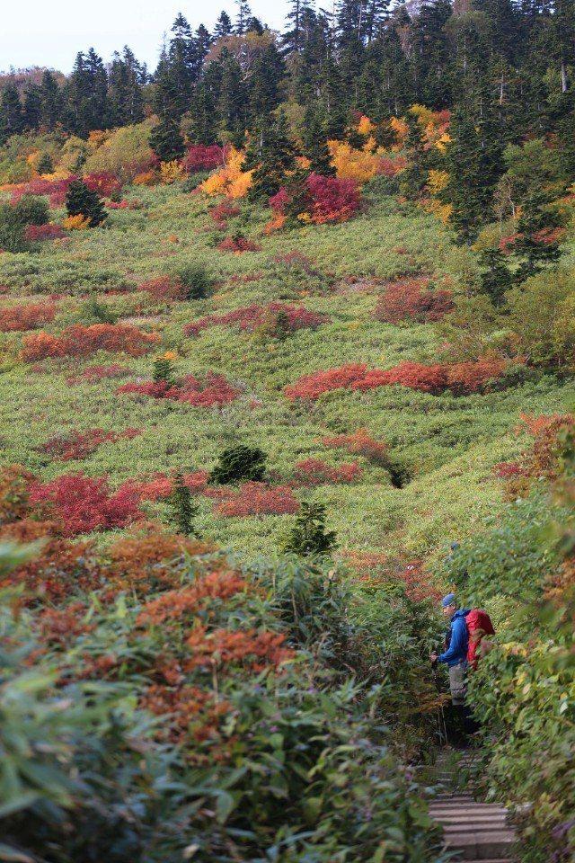 ▲前往火打山途中,大自然調色盤散落著黃綠紅的顏色,我們也都是醉了。(Cliff ...