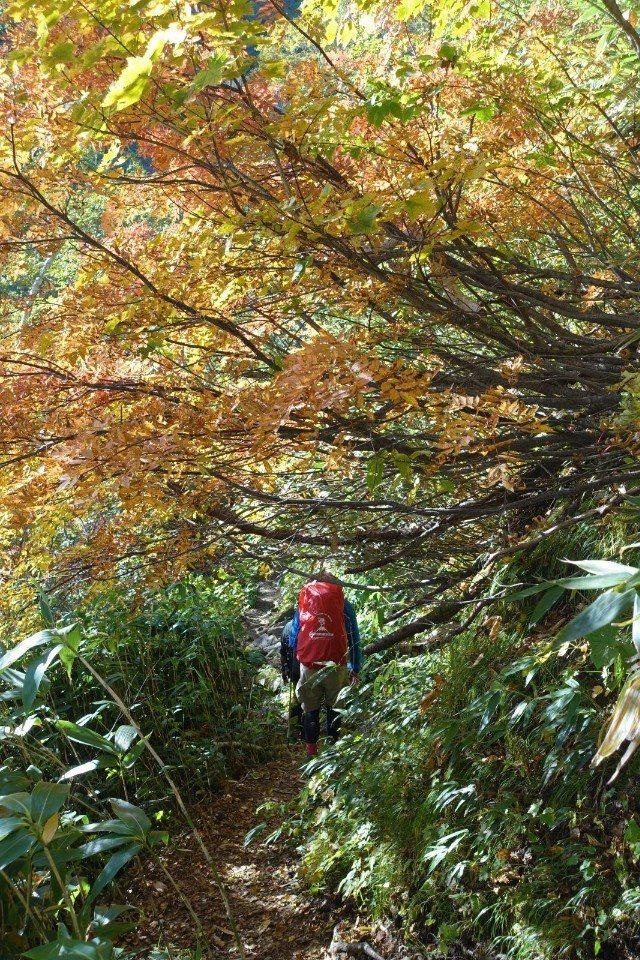 ▲穿過轉紅的林間。(Cliff 攝)