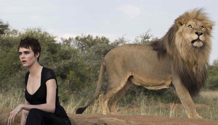 卡拉迪樂芬妮表示可以有機會和野生動物,特別是和獅子一起工作,是我長久以來的夢想!...
