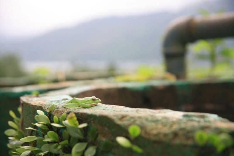 夏季為蛙類繁殖的季節。圖/林管處提供