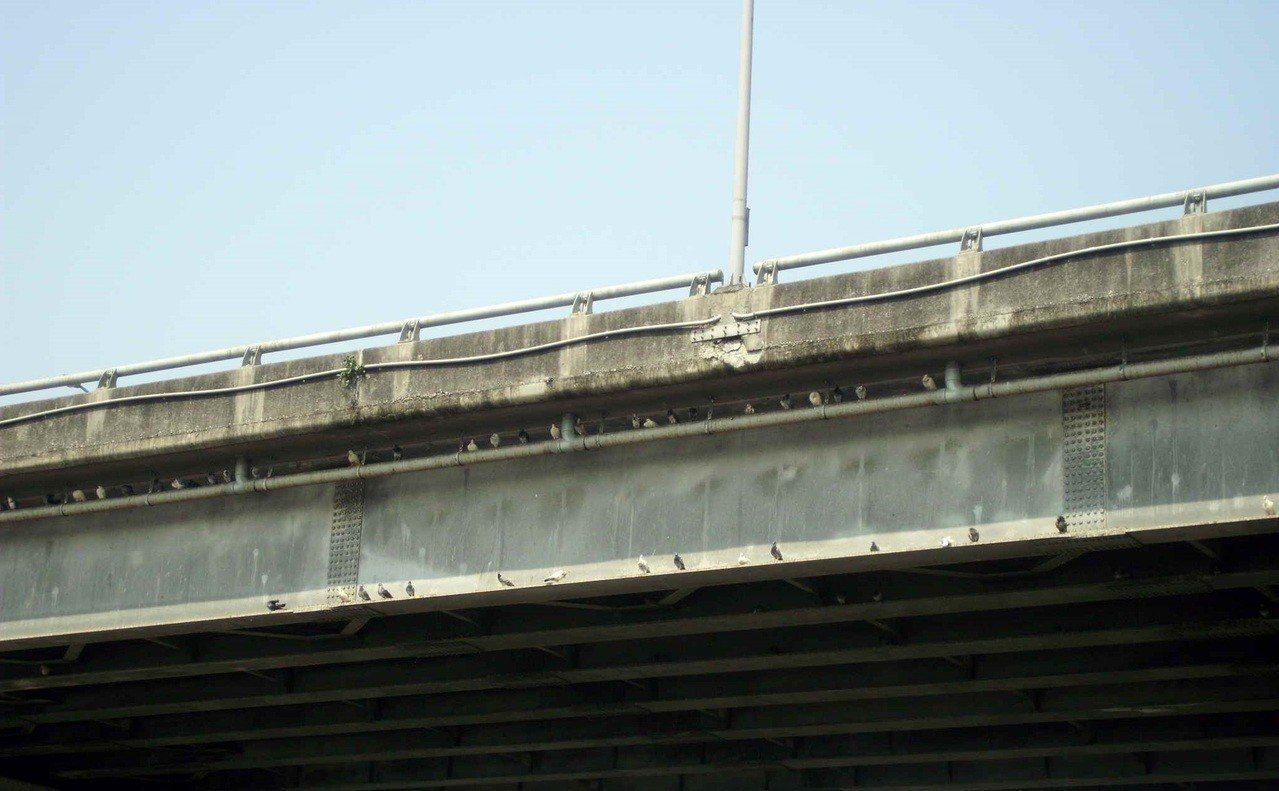 台64線及中山路高架橋下出現大量野鴿聚集。圖/新北市動保處提供