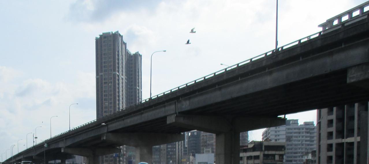 台64線及中山路高架橋下最近出現大量野鴿聚集。圖/新北市動保處提供