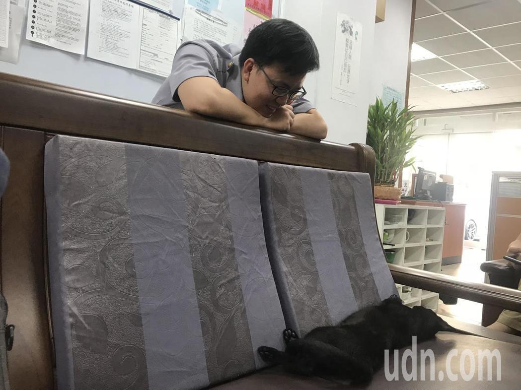 土城警分局清水派出所副所長郭晉瑋表示「喵喵」已經成為所貓。記者袁志豪/攝影