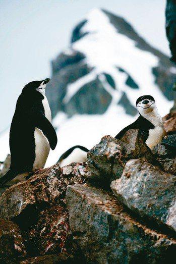 南極的企鵝。 圖/姚謙、大房小山提供