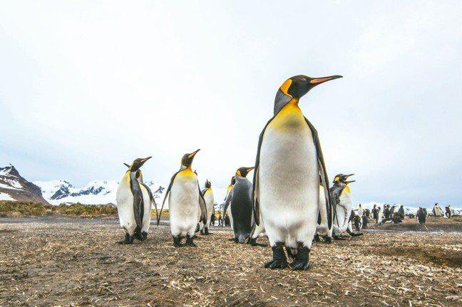 登上南極的遊客,最愛拍企鵝。 圖/業者提供