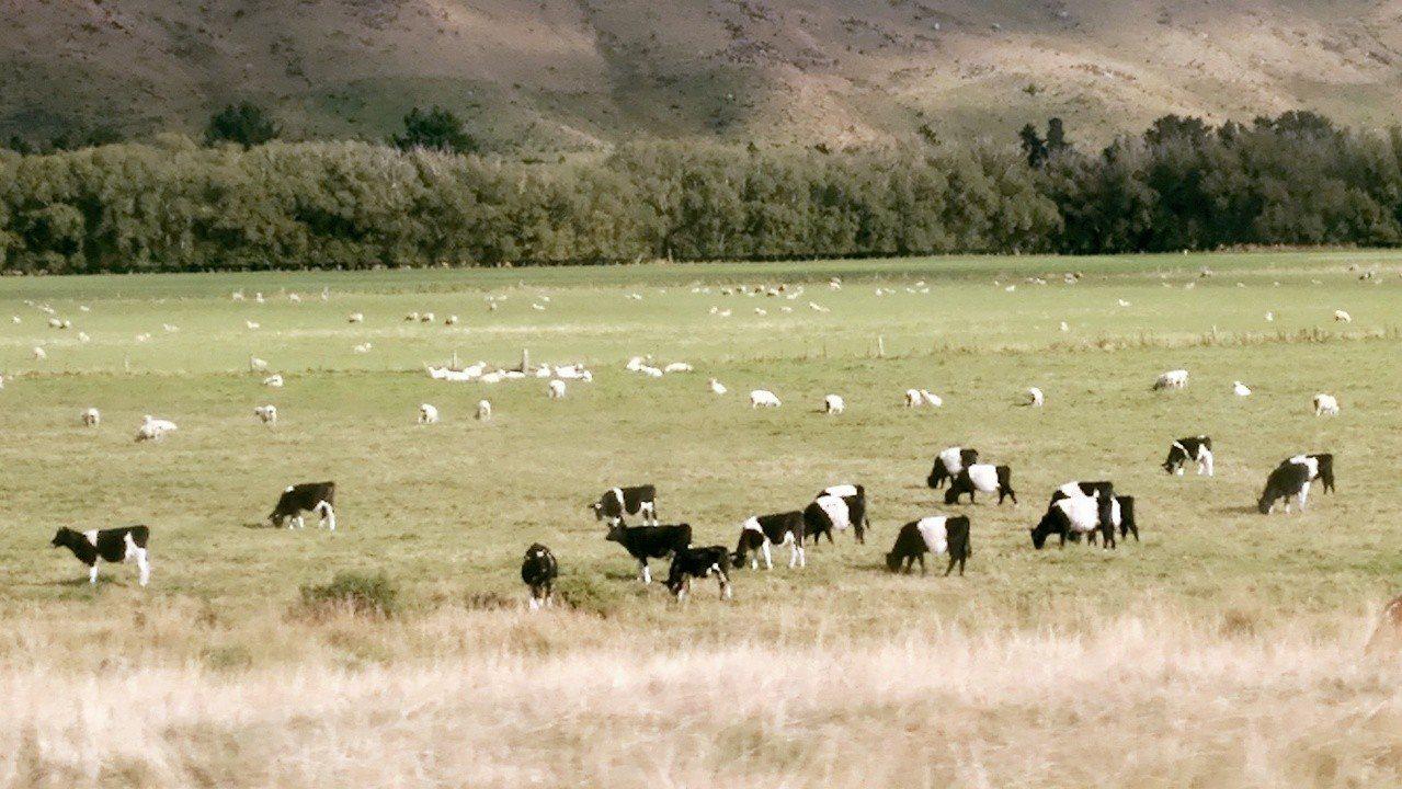 風吹草低見牛羊。
