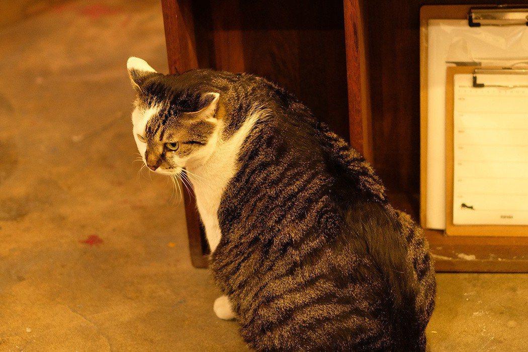 幸運遇到店貓,懶洋洋地在迎接客人。