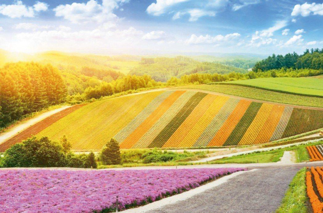 日本北海道向來是國人最愛的夏季旅行地點之一。 圖/燦星旅遊提供