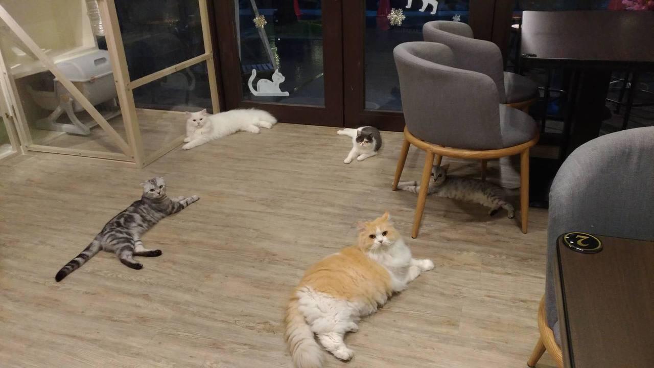 圖/摘自和貓咪有約粉絲團