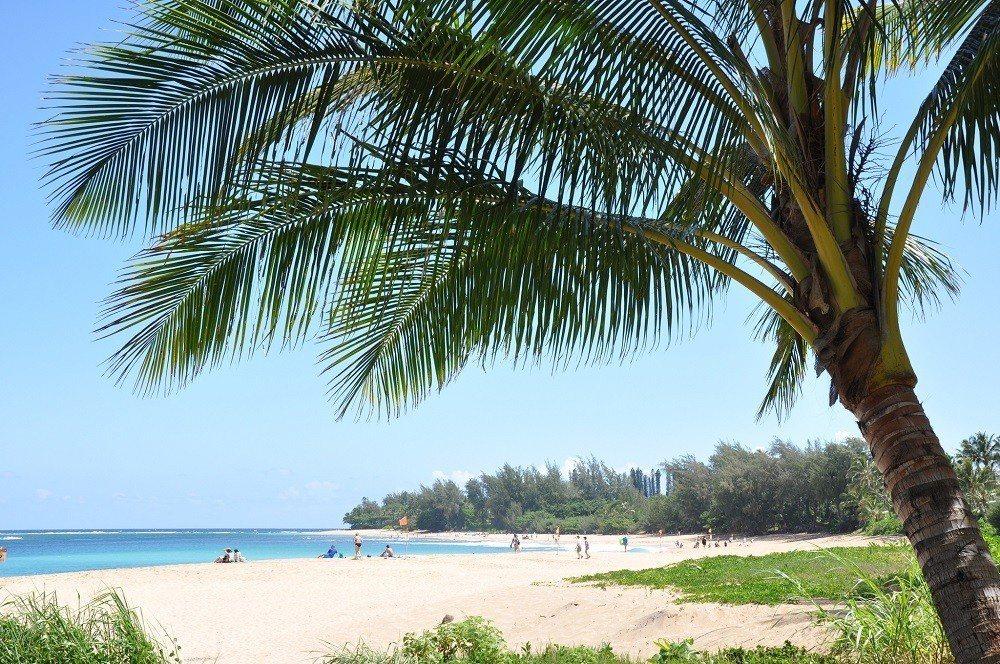 ▲夏威夷可愛島椰子海岸。(圖/攝影者:Jason, Flickr CC Lice...