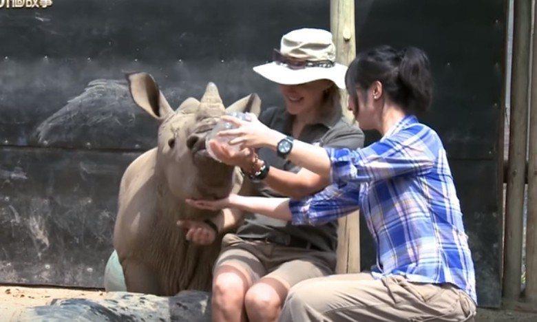白心儀近距離餵食白犀牛寶寶。圖/擷自YouTube