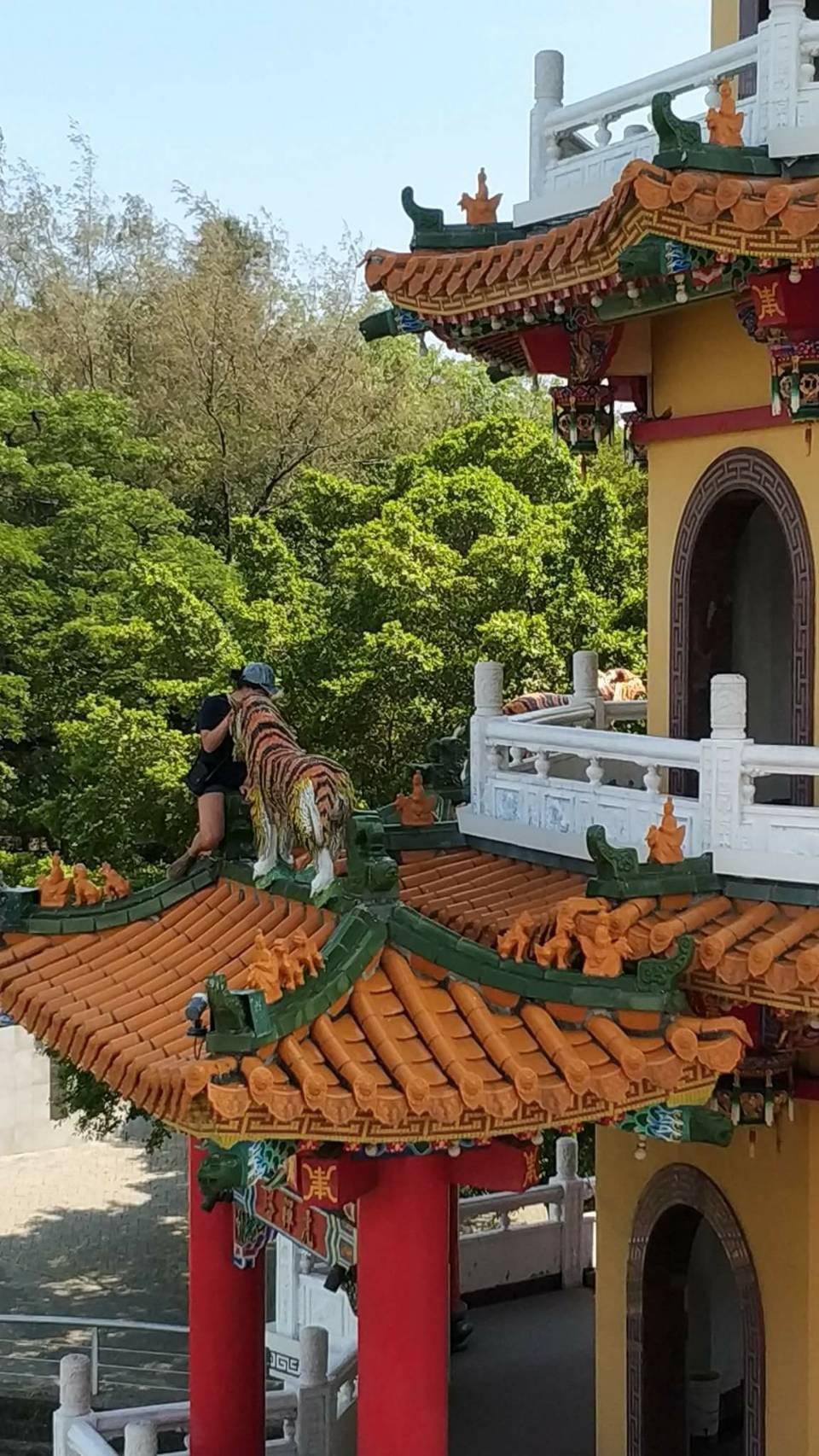 這名女遊客爬出虎塔外拍照,相當危險。圖/翻攝自爆料公社臉書