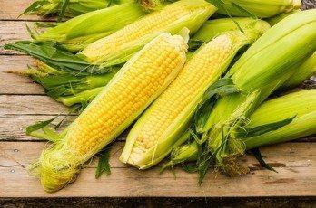 食安問題再現!國產玉米混基改玉米。圖/本報資料照片