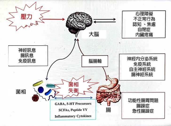 高雄榮總胃腸肝膽科醫師許秉毅指出,大腦與腸道如同雙向高速公路,腸胃菌相在其中扮演...