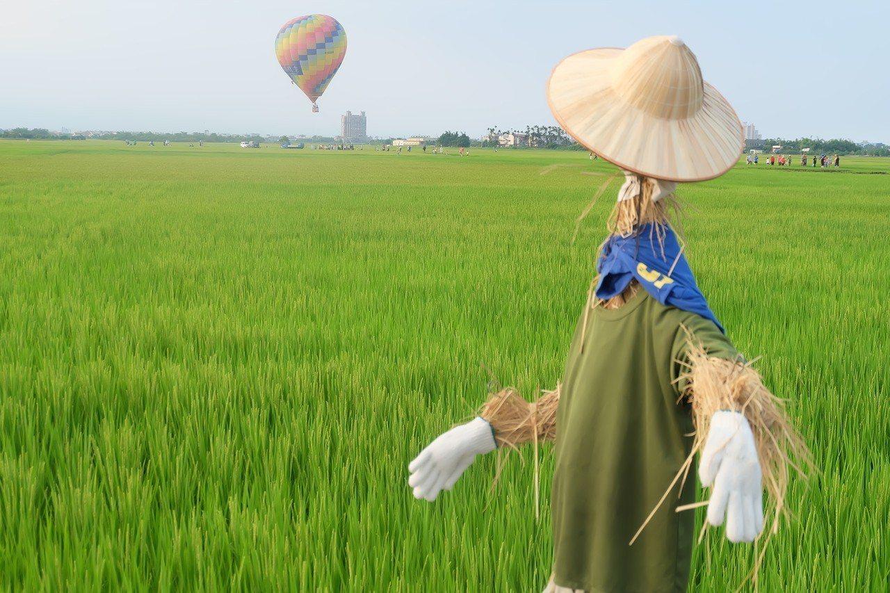稻田搭配熱氣球的美景。 記者張芮瑜/攝影