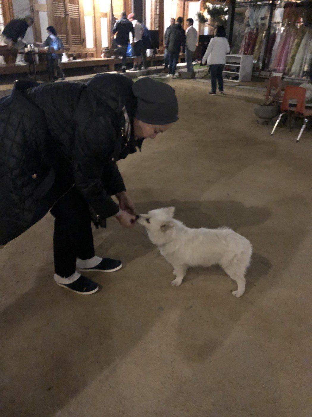 唐美雲赴韓慶州拍「高僧傳」,救流浪狗不分國界。圖/民視提供