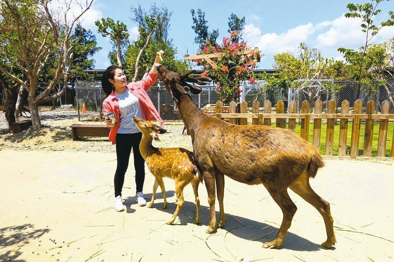 鹿境餵鹿,也是免費體驗項目之一。 圖/華泰瑞苑提供