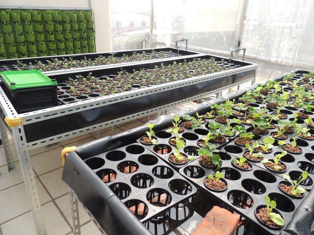 屋頂綠化也可以做魚菜共生。 圖/沈逸鈞提供