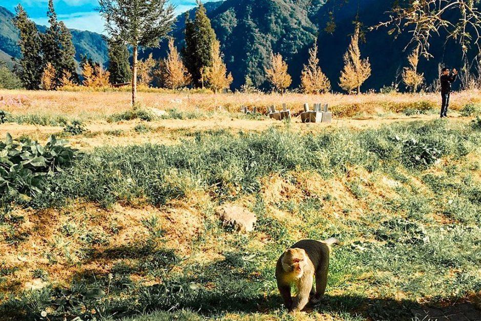 ▲台中近郊戶外景點-武陵農場露營|圖片來源:Tripbaa趣吧!達人帶路