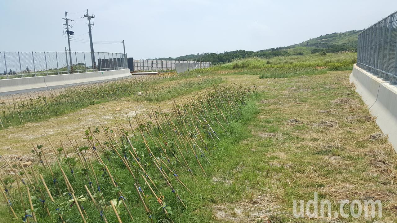西濱快速公路白沙屯到南通灣段6月2日通車,沿途設有一座跨越西濱公路的生態廊道橋。...