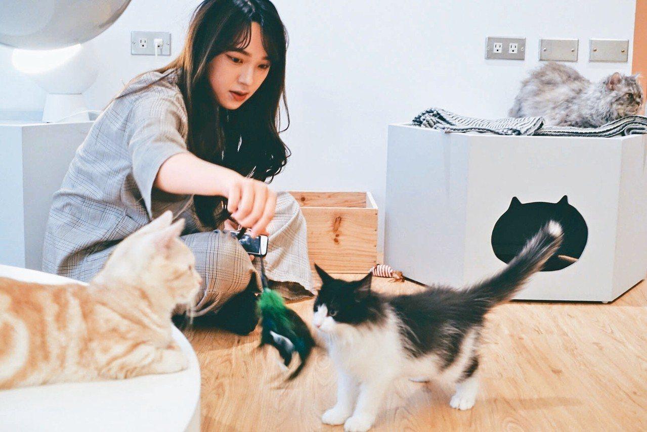 貓的生活提案二樓不只是餐廳,也有貓咪與人共同玩樂的小樂園。 記者沈佩臻/攝影