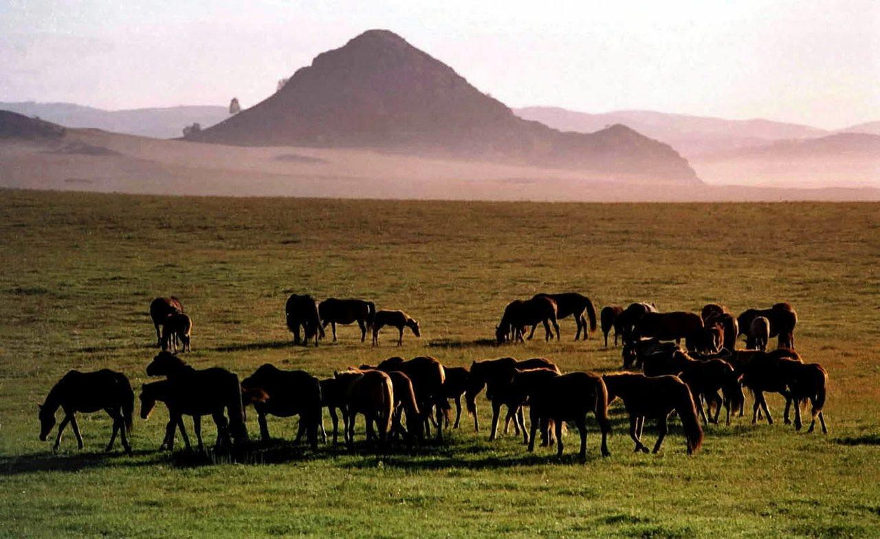 秋日的晨霧飄散在廣袤的烏蘭布統草原上,草原呈現出夢幻般的色彩。《三國演義》等10...