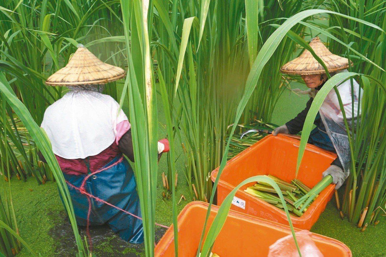 農業缺工問題嚴峻。聯合報系資料照