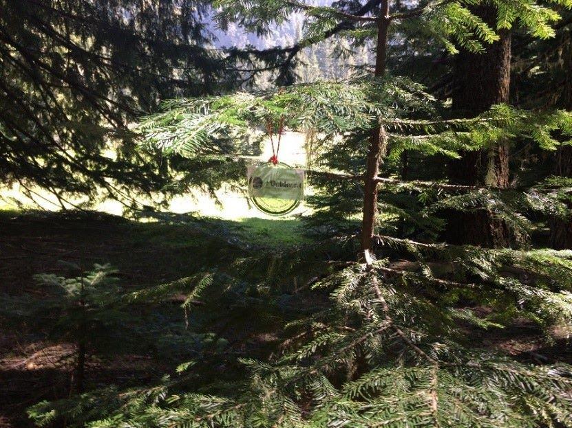 威拉米特國家森林提供