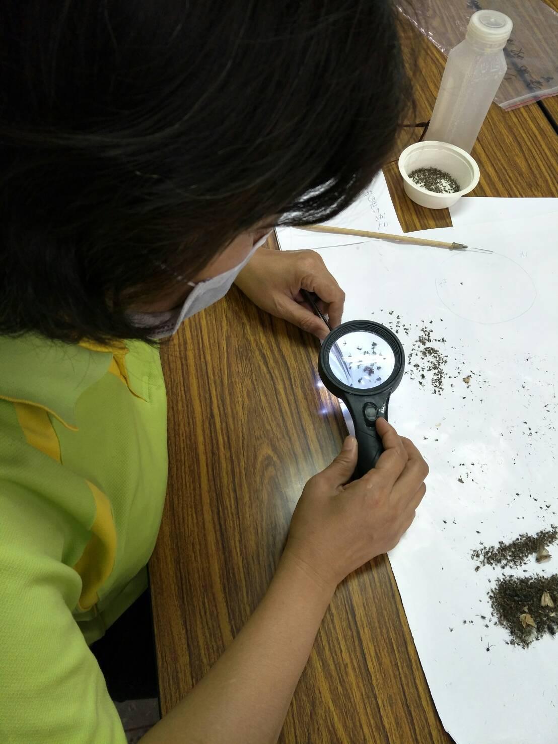 防疫人員計算捕獲蚊體種類與數量。圖/高雄市衛生局提供