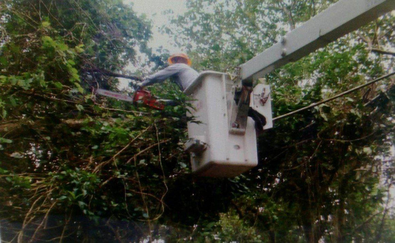 仁愛鄉清境地區今突發生跳電,經查為樹倒扯斷電線所致,搶修後在中午12時15分恢復...