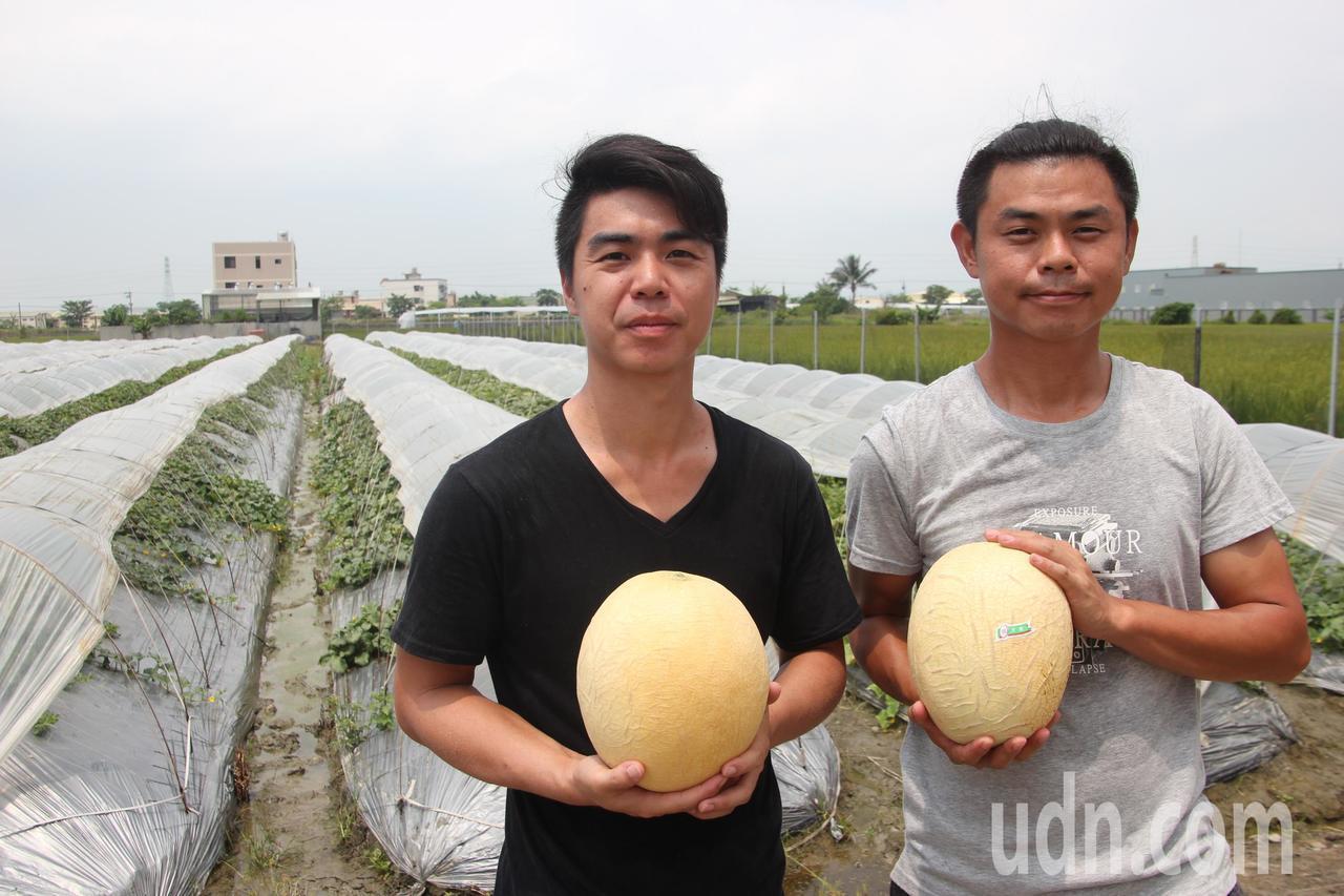 青農周家鵬、周家慶兄弟向專業農民討教,成功種出好吃的天蜜哈密瓜。記者林宛諭/攝影
