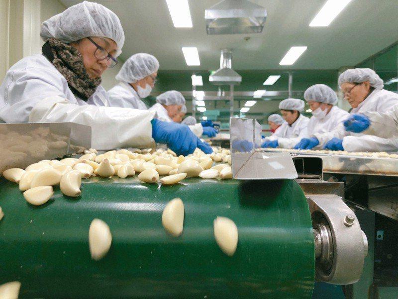 南韓60歲以上已受雇和正在找工作的人口數,已超越20多歲族群。圖為一群女工在南韓義城郡的蒜頭加工廠工作。 路透