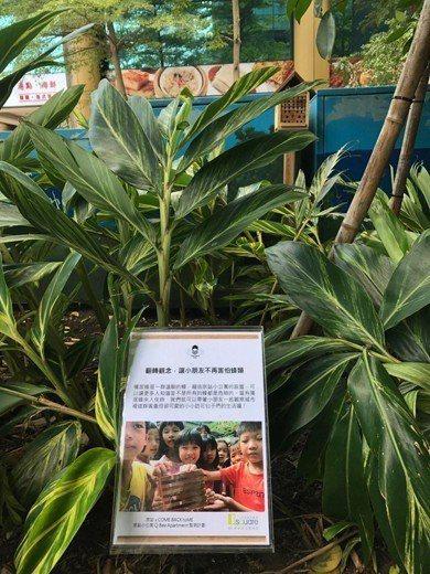 京站在台北市中心利用獨居蜂旅館增加原生蜂類的棲地,也作為教育示範的場所。 圖...