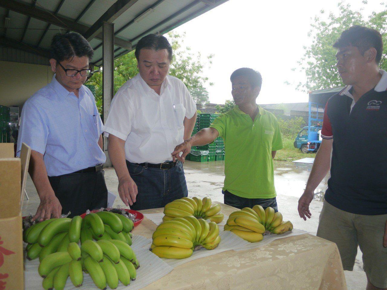 各地香蕉價格不振,高市代市長許立明(左二)視察旗山香蕉產銷班。年輕蕉農說,國內香...