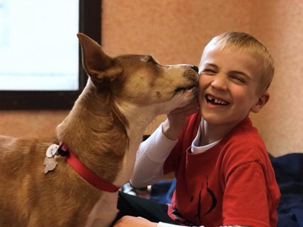 羅曼(Roman McConn)雖然年僅六歲,已經協助超過1000隻流浪狗免於撲...