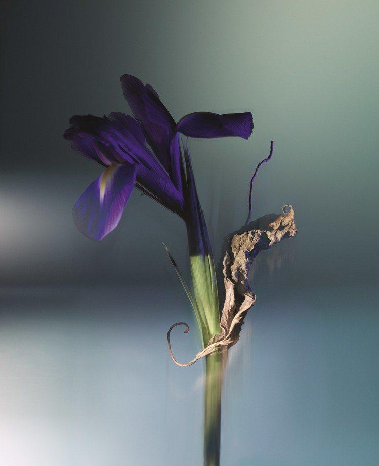 「ORAGE雷暴」選擇鳶尾花搭配廣藿香心,打造出令人眼睛一亮的木質香調。圖/路易...