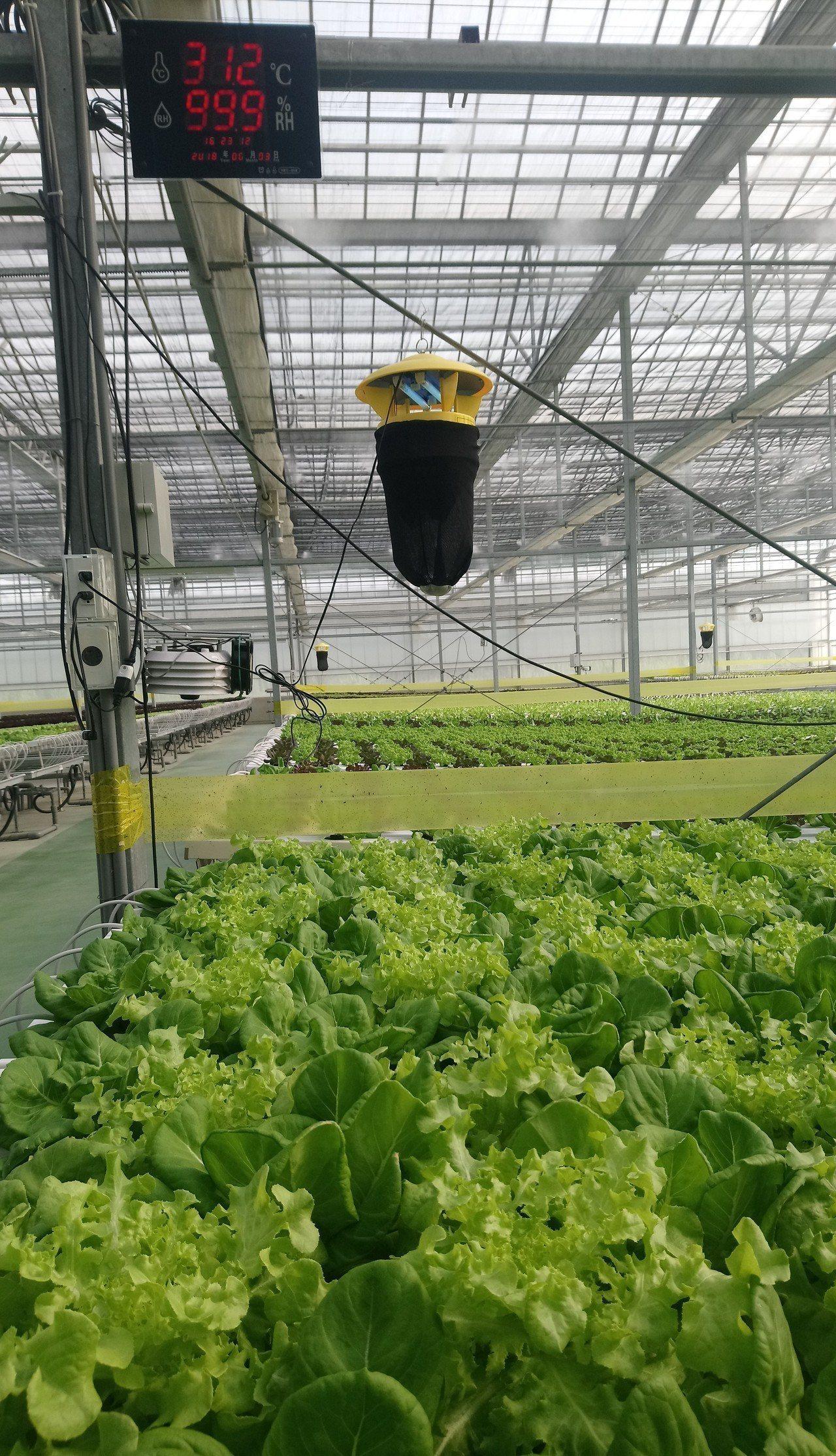 高科技溫室以電腦監控溫濕度,種植高價值農作。記者卜敏正/攝影