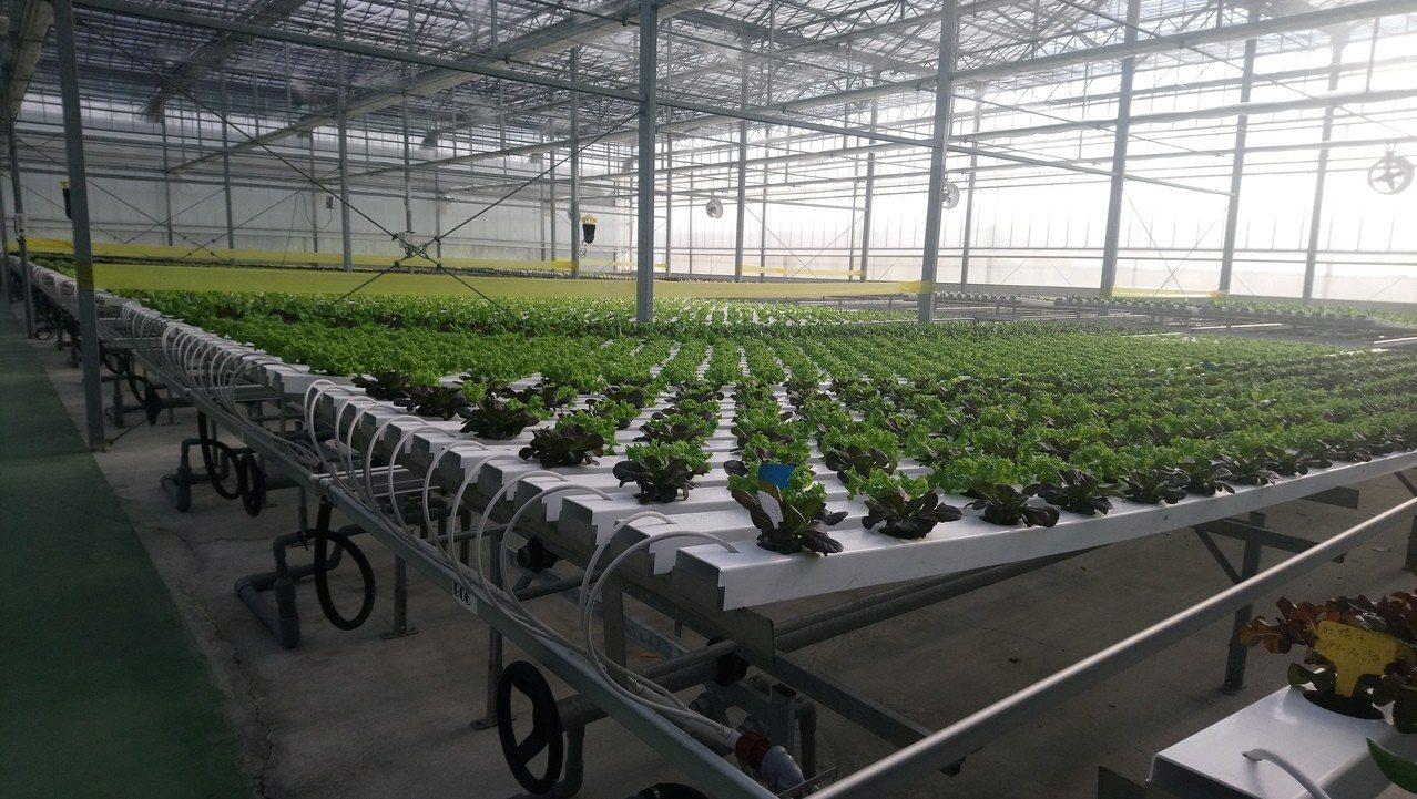 曾明進透過高科技溫室種植高價值農作。記者卜敏正/攝影