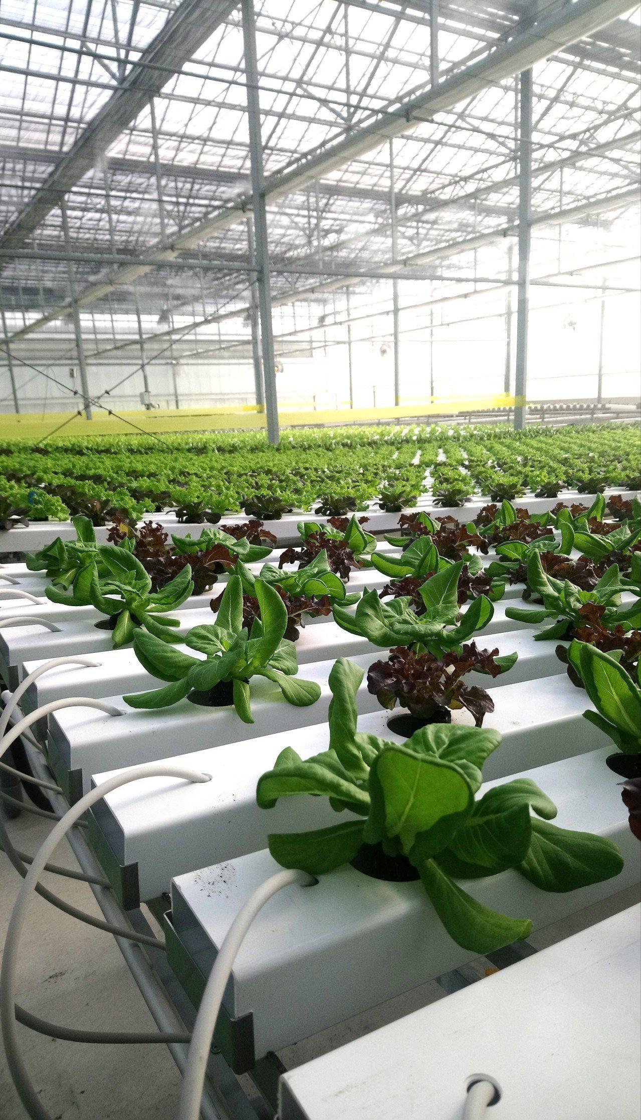溫室有全自動的分流灌溉系統。記者卜敏正/攝影